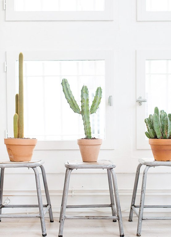 houseplants-The-Lifestyle-Edit-2